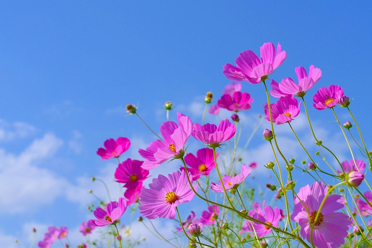 千葉市花の美術館コスモスフェア