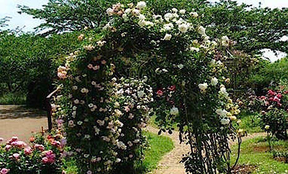 千葉県立青葉の森公園