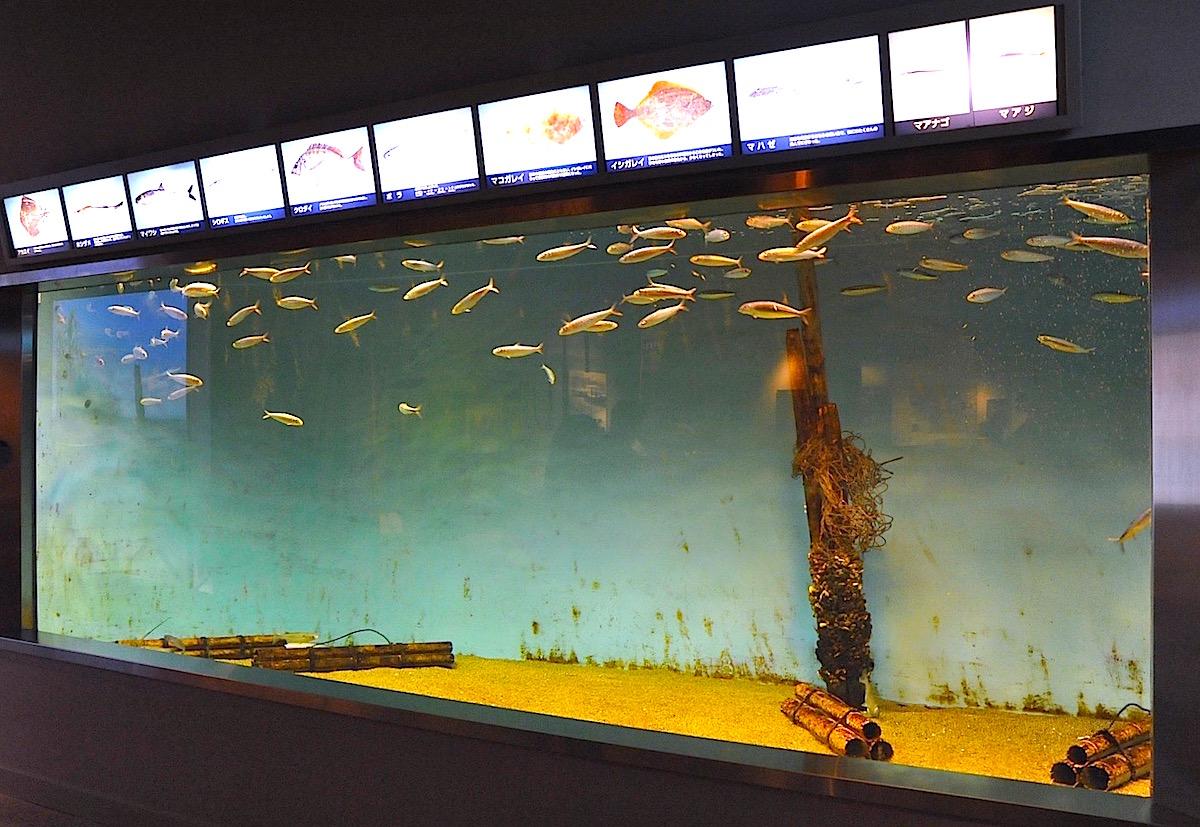 かつて東京湾にいた魚などを飼育する水槽