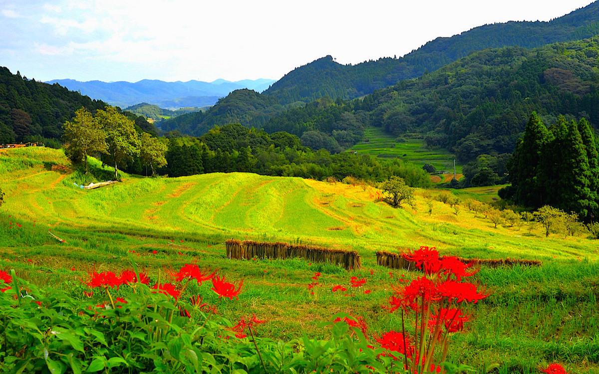 大山の千枚田