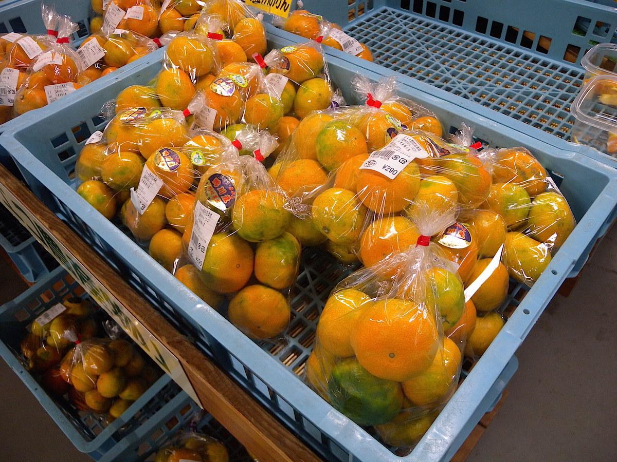 鴨川市は柑橘類の生産も盛ん