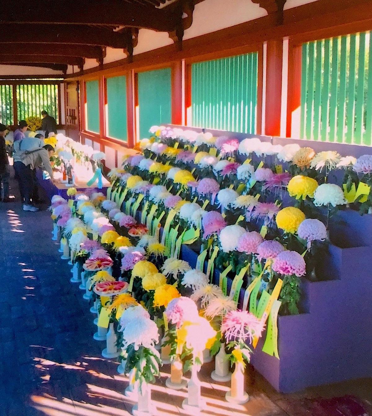 上総国分尼寺跡の復元された回廊が菊花展の会場に