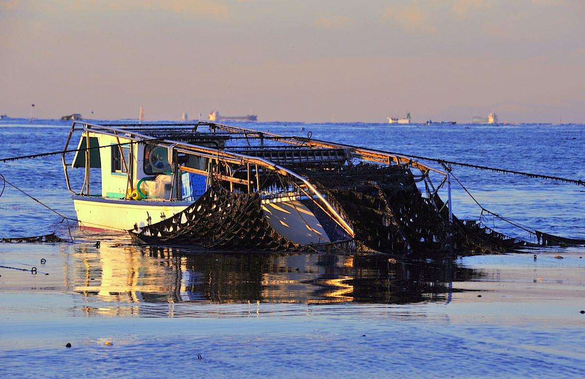 富津海苔漁