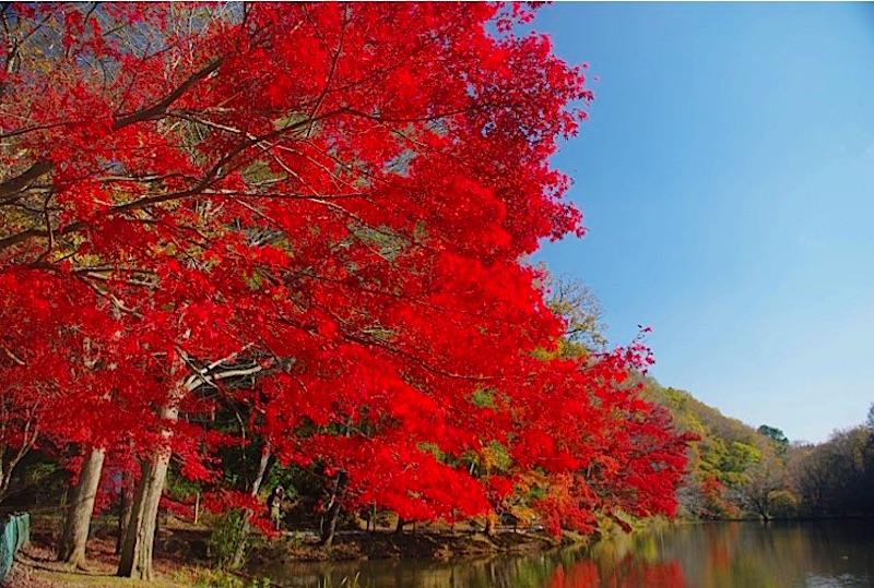 泉自然公園・紅葉