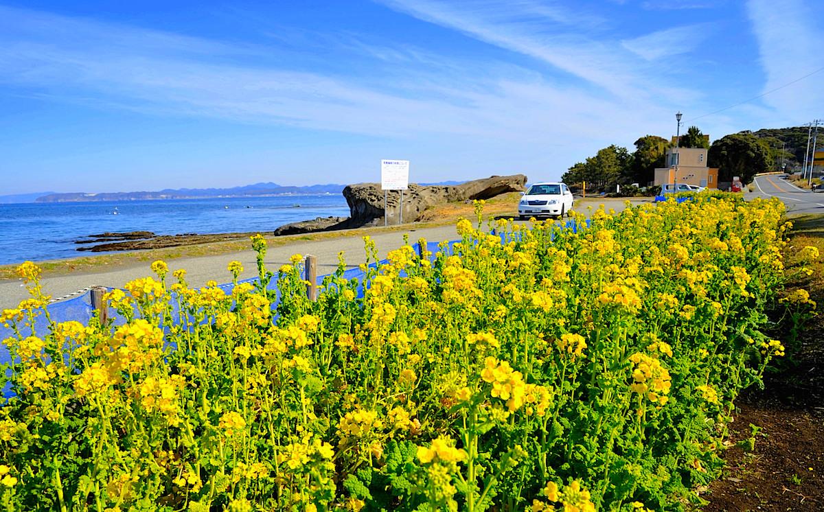 第1フラワーライン、休暇村館山に近い見物海岸