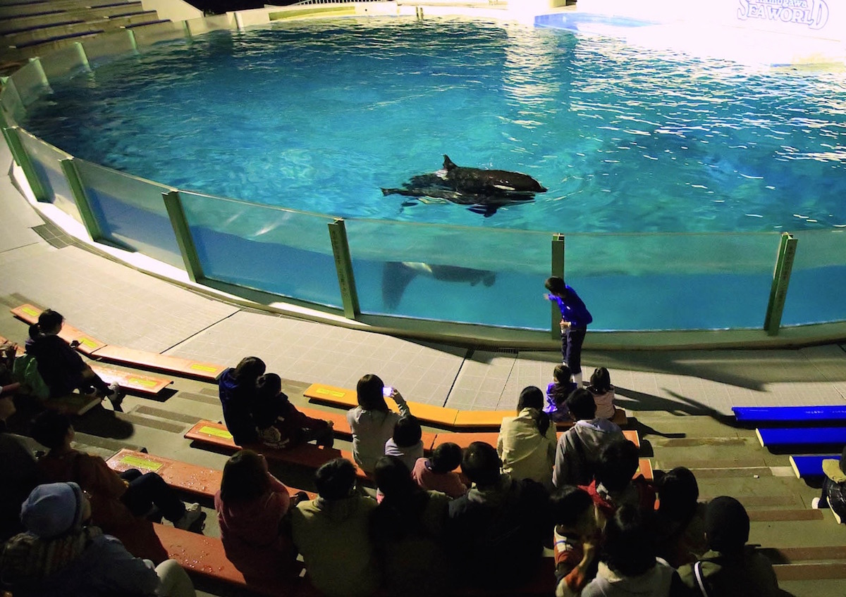 『夜の水族館探検』も楽しめます!