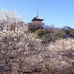 三溪園『観梅会』