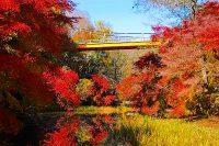 泉自然公園で紅葉見頃|千葉市