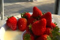 マンモスいちご園(木更津市)で『イチゴ狩り』